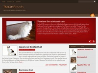Cats Breeds
